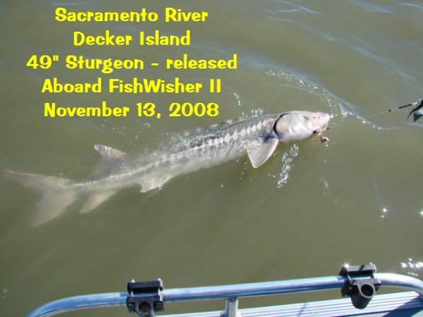 Five sturgeon in three days: Priceless!