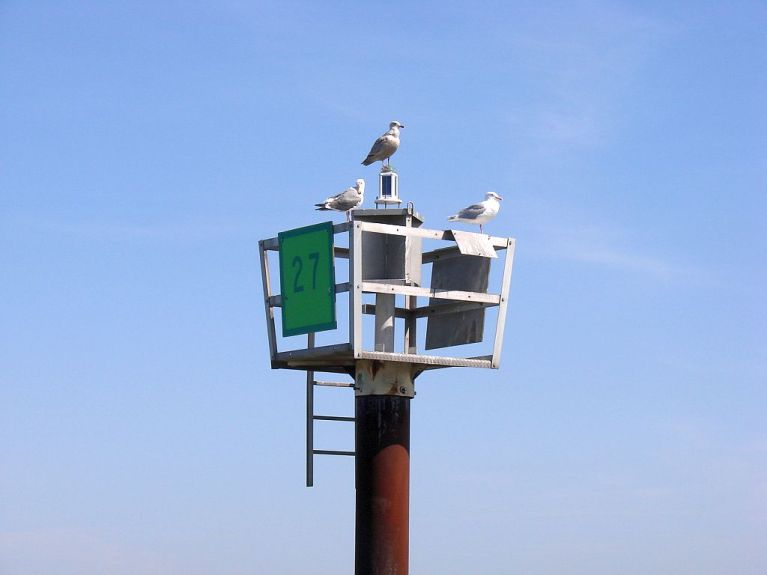 2013-3-12c Suisun seagulls