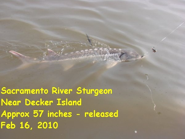 2010 Sturgeon Fishing!