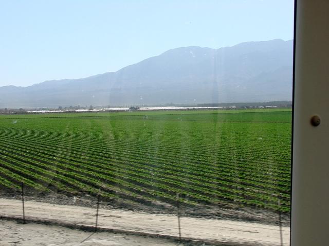 2014-1-14g desert row crops