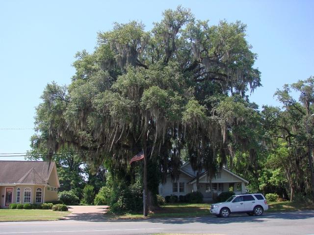 2014-5-18c Bainbridge, GA beautiful moss covered tree