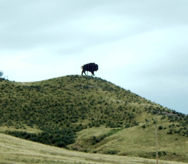 2014-8-28h Colorado Bison on state line