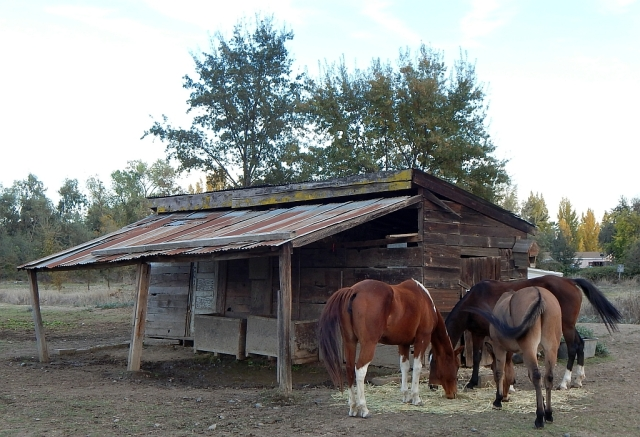 2014-11-5h outback horses