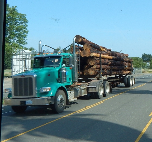 2015-5-5e Logger along SR99 near Red Blluff