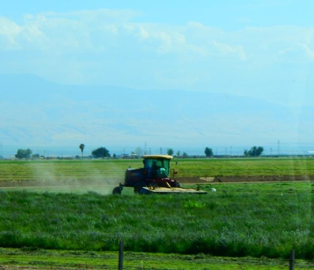 2015-7-9f still farming