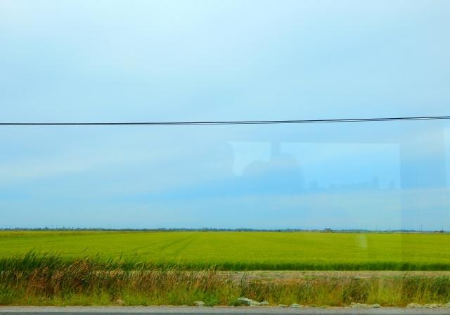 2015-8-4c Rice field