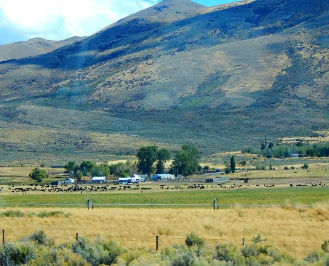 2015-9-16h Nevada spread