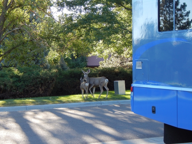 2015-9-19a Deer out front