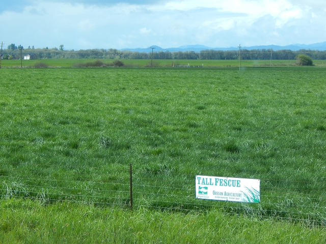 2016-4-4d grass capital of the world