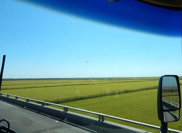 2016-9-12d-rice-paddies