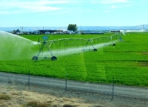 "As we neared I-182 much irrigation transformed some of the area into farmland. Here a ""pivot center irrigation"" system waters a crop."