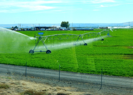 """As we neared I-182 much irrigation transformed some of the area into farmland. Here a """"pivot center irrigation"""" system waters a crop."""