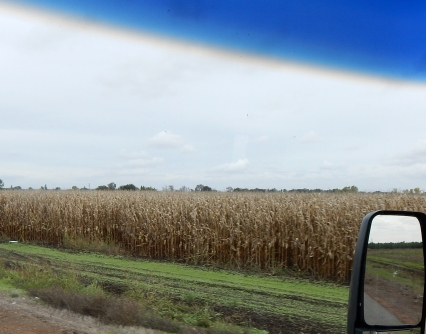 It was Halloween and this crop of dried corn seemed an appropriate photo.