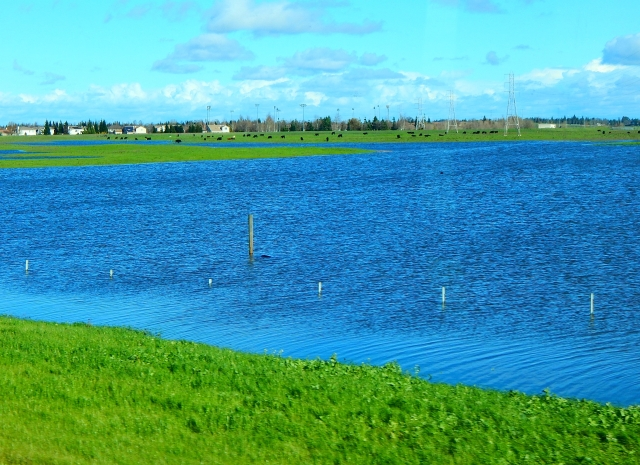 2017-1-11a-flooded-pasture-along-i-5-note-fencetops