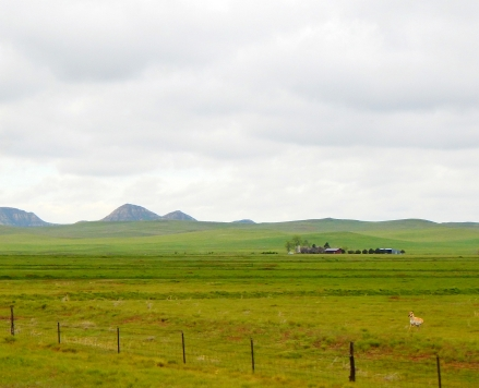 A remote Montana ranch way, way out in the middle of nowhere. Note the pronghorn antelope.