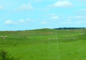 Look closely and you'll see a whole herd of pronghorn!