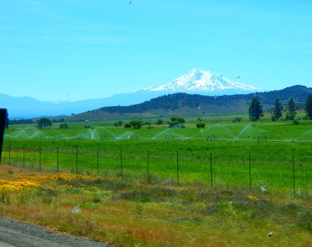 Irrigation works magic under the gaze of Mt. Shasta.