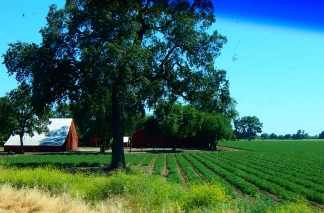 With irrigation, farming makes even the dry valley a pretty place.