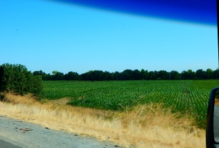 The drive was warm and dry and brown except in areas under irrigation, such as this corn field, or...