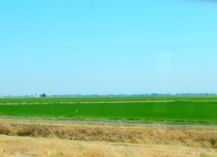Once north of Sacramento we were in rice country.
