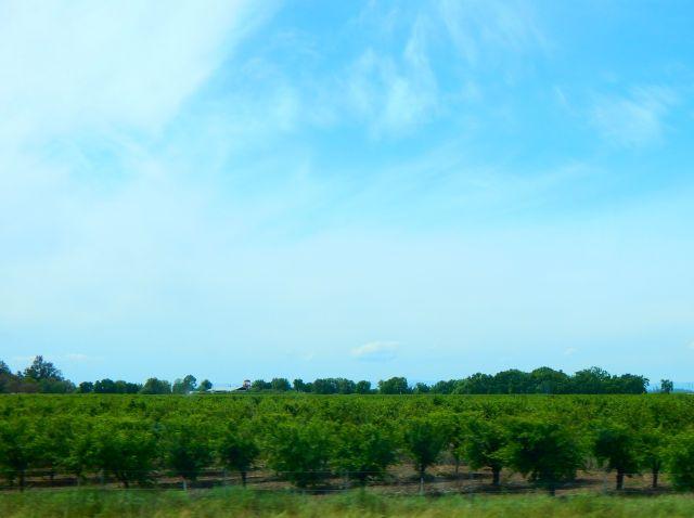 2018-4-18c Orchard