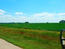 Soybeans to the horizon!