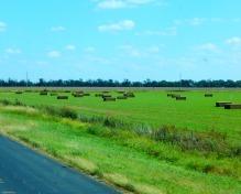 ...just a pretty hay field.