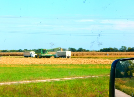I saw a lot of harvested fields during the day's drive. Here they're loading corn from the harvester to be trucked to storage.