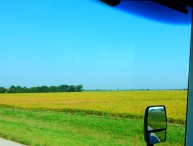 Missouri soybeans to the horizon!