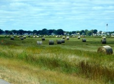 Yes... I'm still fixated on hay fields.