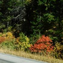 2018-9-24d Autumn colors