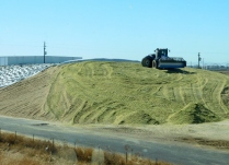 """Here's how much of the area corn is used. This is """"green chop"""", the harvested and chopped up corn that will feed dairy cattle for the coming year."""