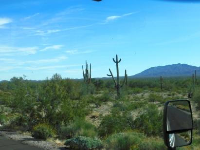 Beautiful Saguaro cacti.