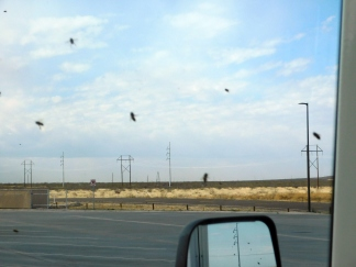 At my stop for lunch at a rest area on I-10, I couldn't even go outside because of the swarming bees. They were outside every window but I had no idea what the attraction was to them.