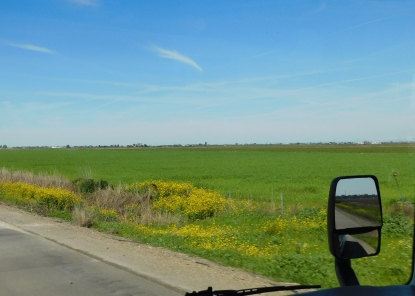 The drive along I-5 was beginning to look like spring time.