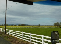 Green and glorious farmland and the Sutter Buttes in the background.