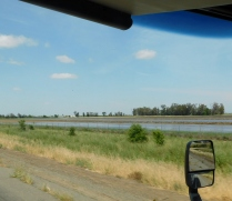Flooded rice paddies along CA99.