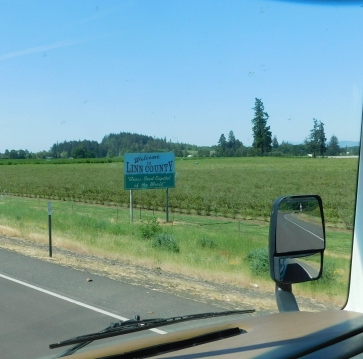 "Linn County Oregon, the ""Grass Seed Capital of the World!"" and there were endless acres of tall grass going to seed for the harvest."