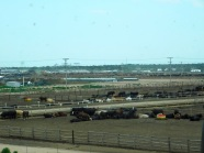 Kansas feedlot. They treat those cattle really well. For awhile, that is. Only for awhile...