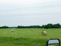 Regular readers probably know that I have a thing for hay fields.