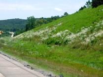 2019-6-19L Arkansas roadside