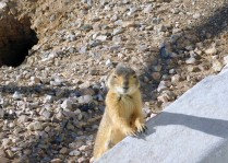 Is this lil' guy not the cutest thing?! And he was far more curious than fearful.