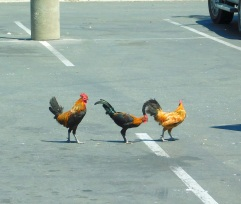 Panhandlers in the In-'n-out parking lot.