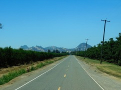 Taking a back road toward the Sutter Buttes and on to Gale's place in the country.