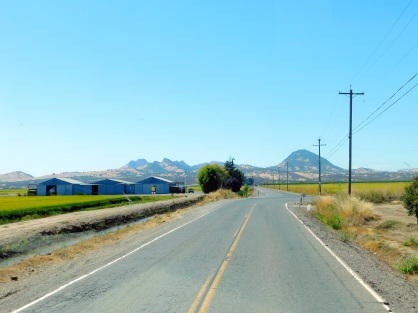 More rice, more Sutter Buttes.
