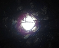 As seen through the pine trees.