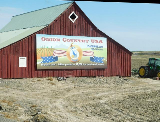 2019-9-16i onion country near Ontario