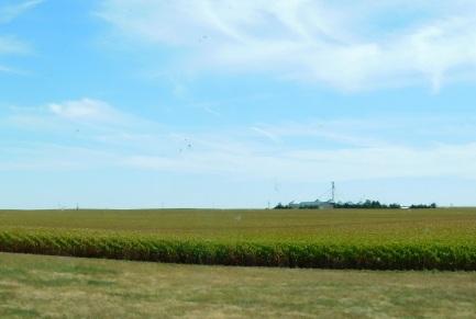 Colorado corn to the horizon!