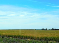 Nebraska corn to the horizon, too!