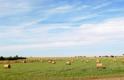 Regular readers know my attraction to baled hay on hay fields. What a bounty on this field!